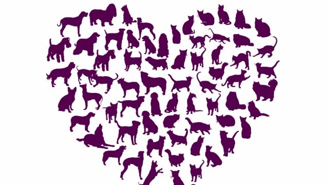 Dyrefoder valgt med hjertet!