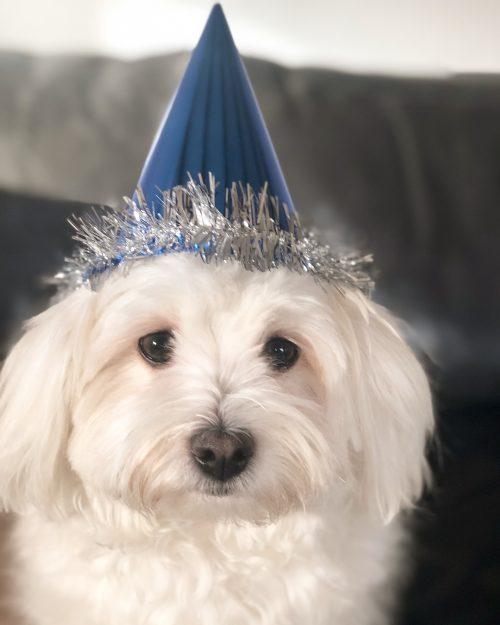 God råd til hunden nytårsaften
