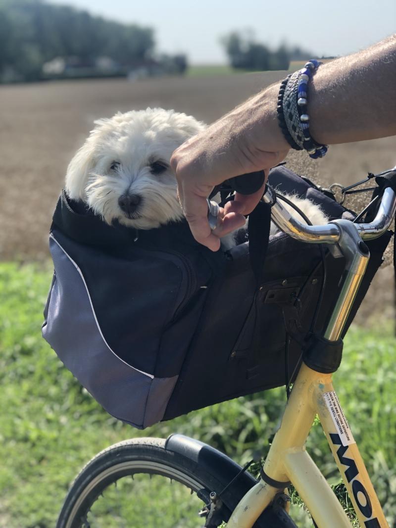 Hund i cykelkurv