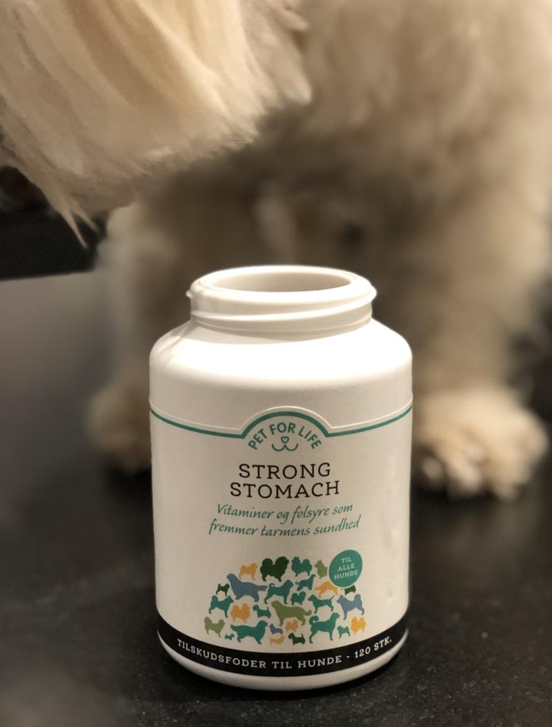 Kosttilskud til hundens mave