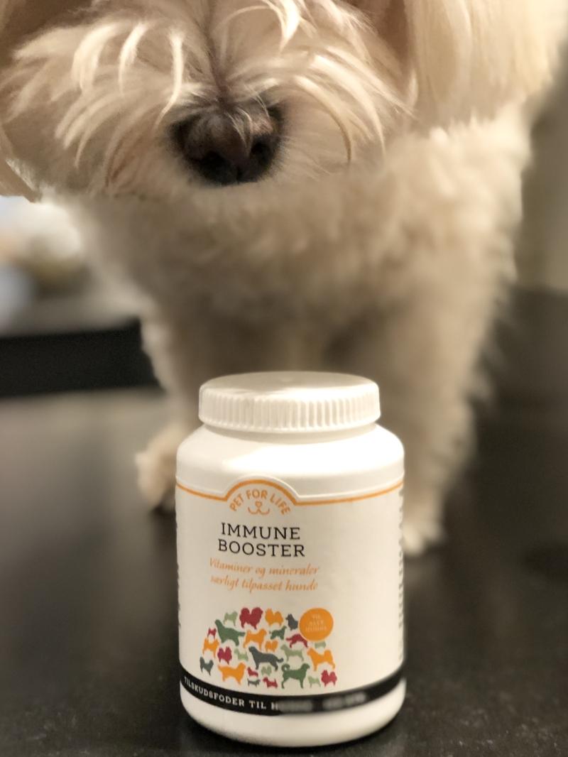 Vitaminpille til hund