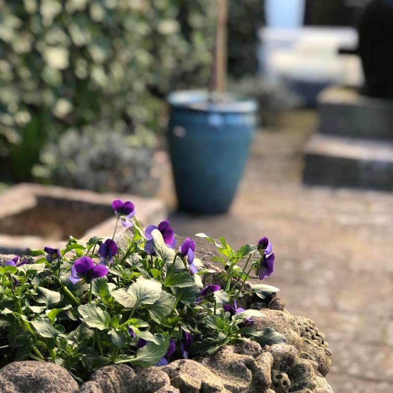 Forår i haven